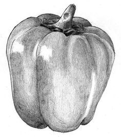 pencil drawing easy shading still techniques drawings sketches basic liron yanconsky bell pepper vegetable simple graphite charcoal tips object examples