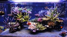 Chingchai's cool tank ||Reefcentral