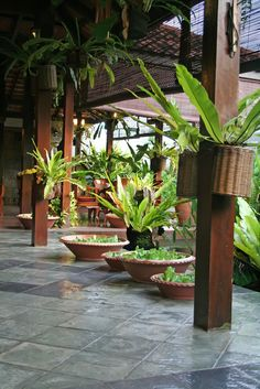 Best tropical patio design ideas to copy right now 02 Tropical Garden Design, Tropical Backyard, Home Garden Design, Tropical Landscaping, Landscaping Plants, Patio Design, Tropical Gardens, Courtyard Design, Fence Plants