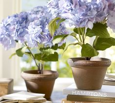 pretty hydrangea pot as giveaways Potted Plant Centerpieces, Lantern Centerpieces, Hydrangea Potted, Purple Hydrangeas, Purple Home Decor, Faux Plants, Outdoor Planters, Flower Images, House And Home Magazine