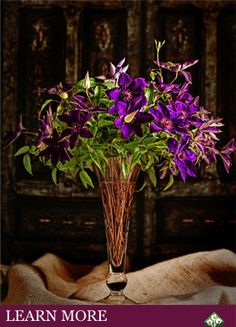 Florida clematis:  Clematis vines produce excellent cut flowers, which last 10 days or more in a vase. Stems are very sturdy;pack and ship very well.  Roseville Farms utilizes its yearly production rotation of millions of Clematis plants to produce large numbers of cut stems weekly for up to eight months of the year. We offer five color Categories: White, Red, Blue, Purple, and Pink.  We currently grow more than 80 varieties of Clematis, Minimum order – 150 steams. Call Dan for more info