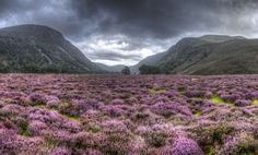 A photograph of Glen Feshie in the Cairngorms National Park wins the 2015 UK National Parks Photo Competition. Cairngorms National Park, Photo Competition, Scotland Travel, Scotland Trip, Natural Wonders, Nature Pictures, Beautiful Landscapes, Places To See, Countryside