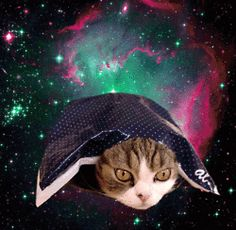OMG cats in space