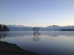 The famous Wanaka willow tree looking misty and moody this morning... www.lakewanaka.co.nz