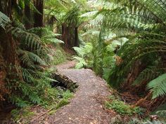 Living in and around Melbourne makes us spoilt for choice when it comes to choosing a bushwalk. Not only do we have the Dandenong…