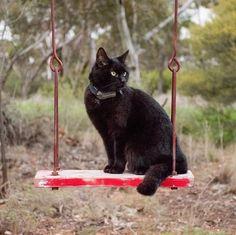 Molla tutto per viaggiare col proprio gatto