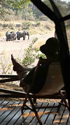 The group has decided to return to camp before sundown. Bianca, taking in all the sights around her has a new found appreciation for the wild and for elephants.