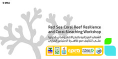 Workshop Banner Coral Bleaching, Red Sea, Workshop, Banner, Banner Stands, Atelier, Banners
