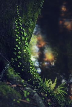 ~~Secret places | I love walking by brooks and streams... The calm and tranquility invigorates me. | by Flick Vlooi~~
