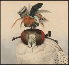 falcon hood - Google Search