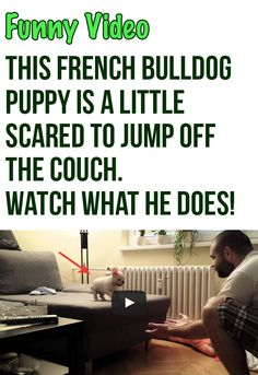 This little french bulldog puppy just jumped into my heart! So cute!! #frenchies #frenchbulldogs #bulldogs