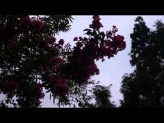 Postcard from Shangli - YouTube