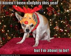 Pets Who Really Do Hate Christmas And Refuse To Spread Holiday Cheer Dog Christmas Pictures, Christmas Animals, Christmas Dog, Christmas Humor, Merry Christmas, Homemade Christmas, Christmas Lights, Funny Babies, Funny Dogs