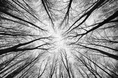 """Lost"" - trees in Kunfehértó #hungary"