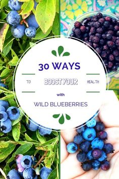 Did you know Wild Blueberries are nutrition superstars? You'll love these nutrition tips + 30 {Delicious} Wild Blueberry Recipes to Boost Your Health! Sponsored by Wild Blueberries /thespicyrd/