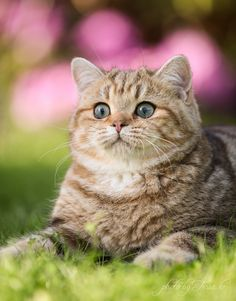 """""""A cat in grass is a tiger in the jungle."""" --British Proverb (well, maybe not this particular cat...)"""