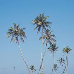 Tropical vibe 🌴 🌴 c l a s s i c • #tttspic #tttstravel #vsco #vscocam #vscotravel #wanderlust #travelling #smilewithvietnam #ftmedd #seamyphotos #vietnamcountrypeople #featuremePF #seekingthestars #expofilm3k #tropicaladdicted #quoteawayy #worldtravelbook #VN_Travels #eyefeast #ourmoodydays #randommagazines #moodygrams #moodytoning #themoodoflife #quietthechaos #shotzdelight #hanoiinlove #vietnamstreetphotography