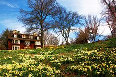 Featured Art - Wisner House Reeves-Reed Arboretum by Allen Beatty