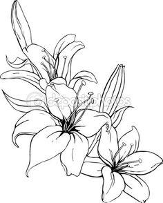 Ilustracja wektorowa lilii w kolorach czerni i bieli.