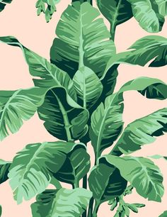 Bringing the outside in, the Pacifico Palm print is sure to transform any room with tropical flair. Hand drawn by our in-house designer, this banana leaf print was originally inspired by the Martinique wallpaper from the Beverly Hills Hotel. Wallpaper Panels, Print Wallpaper, Wallpaper Roll, Iphone Wallpaper Summer, Pink Iphone, Iphone 7, Peach Wallpaper, Classic Wallpaper, Floral Wallpaper Phone