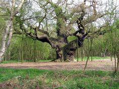 Eng,Nottinghamshire,Sherwood Forest