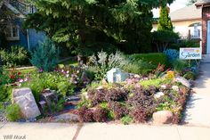 Front yard garden in Edmonton #northerngardening