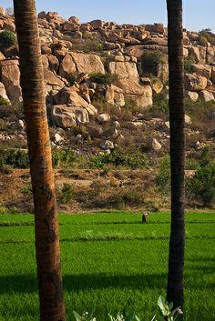 Paddy fields, Anegundi