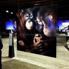 """Ausflugsziele in NRW  Die Ausstellung """"Wunder der Natur"""" ist einen Ausflug wert.   Ein kleiner Bericht ;-)"""