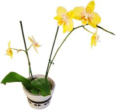 Flowers are of course a standard in the kitchen, but why not try a flower that's a bit more exotic?