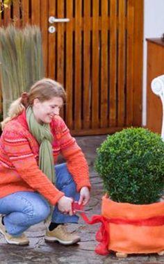 Schutz für winterharte Kübelpflanzen Style, Balcony, Lawn And Garden, Swag, Outfits