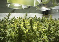 How to grow marijuan http://ift.tt/2og5zfF