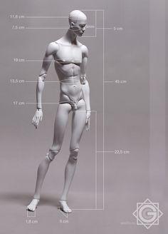 body_size.jpg