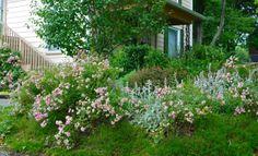 Wife, Mother, Gardener: Gardening in Pennsylvania~ June GBBD 2012