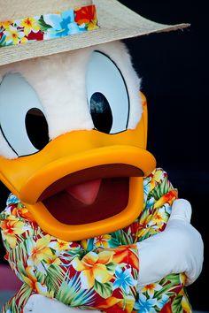 donald duck chillin