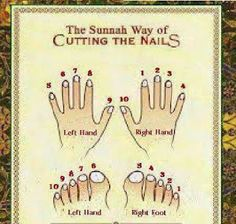ISLAMIC QUOTATIONS: Sunnah Way of Cutting the Nails