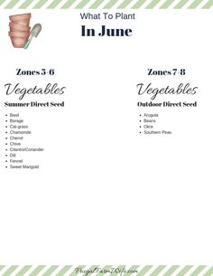 Vegetables To Plant In June List Of Vegetables, Planting Vegetables, Growing Vegetables, Vegetable Garden, Spring Plants, Spring Garden, Succession Planting, Plant Zones