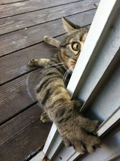 Leave it open. BRB. For more cat pics, stop by https://www.facebook.com/catloversonly and don't forget to share your kitty while you're there (tabby or otherwise). :)