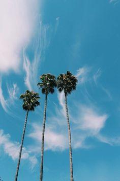 Palms| #SAVVYwcm @SAVVYwcm
