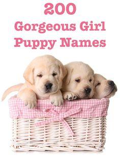 Female Dog Names - Hundreds of Gorgeous Girl Puppy Names 200 Girl Puppy Names Cute Girl Dog Names, Funny Dog Names, Cute Names For Dogs, Cute Dogs, Yorkie Names Girl, French Bulldog Names Girl, Country Dog Names, Small Dog Names, Funny Dogs
