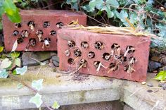 Making a bug hotel is a great little project for late Autumn in the garden.