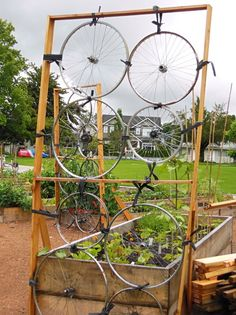 Bike wheels transformed into garden screen for Mount Pleasant community garden. Along Ontario St. bike route. Vancouver 2012. Photo by J. Chong