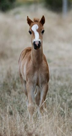 Such a cute and elegant stature c: