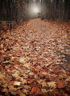 GORGEOUS Fall Photo..... Etsy listing at https://www.etsy.com/listing/217567898/woods-print-forest-strange-light-secret
