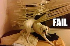 Mess Made by Dogs