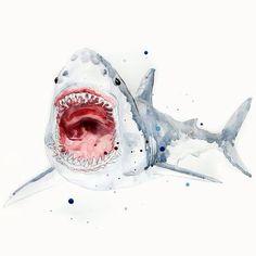 Great White Shark Art Print by Julie Lehite Animal Drawings, Art Drawings, Shark Drawing, Shark Art, Guache, Great White Shark, Art Inspo, Watercolor Paintings, Cool Art
