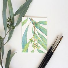 Original ACEO green Eucalyptus buds - miniature painting by Zoya Makarova