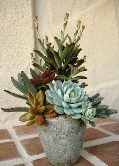 Ultimate Solution for Succulent Arrangements - prekhome Succulents In Containers, Container Plants, Cacti And Succulents, Planting Succulents, Cactus Plants, Container Gardening, Planting Flowers, Indoor Gardening, Container Flowers