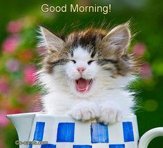 Good #Morning Dear #Friend. | friendshipday | ecard | cat | kitten | cute | friendship |  http://www.123greetings.com/events/friendship_day/happy/good_morning_dear_friend.html