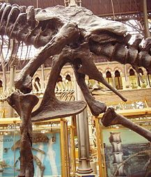 Dinosaur - Wikipedia, the free encyclopedia