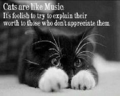 Cats #cat #quotes #cats =^..^= www.zazzle.com/kittyprettygifts